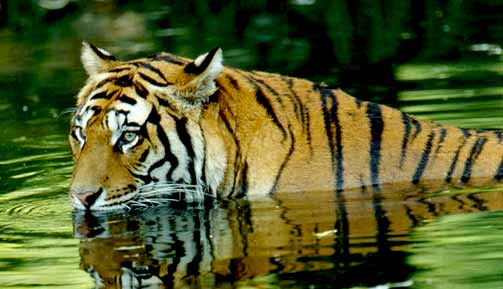 Jim-corbett-national-park