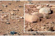 Mars-Rat-Photo-A-Secret-NASA-Conspiracy-PETA-Would-Be-Angry