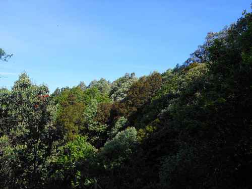 Binsar_Oak_Forests