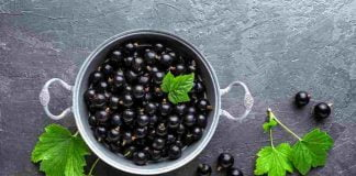 Black Currant Nutrition Facts & Calories Information