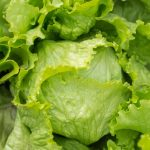 Lettuce, iceberg (includes crisphead types), raw Nutrition Facts & Calories Information