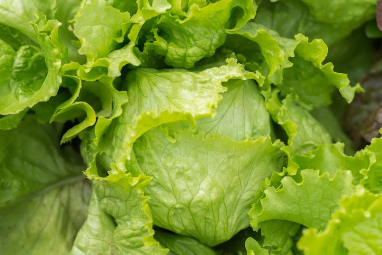 lettuce iceberg nutrition facts and calorie