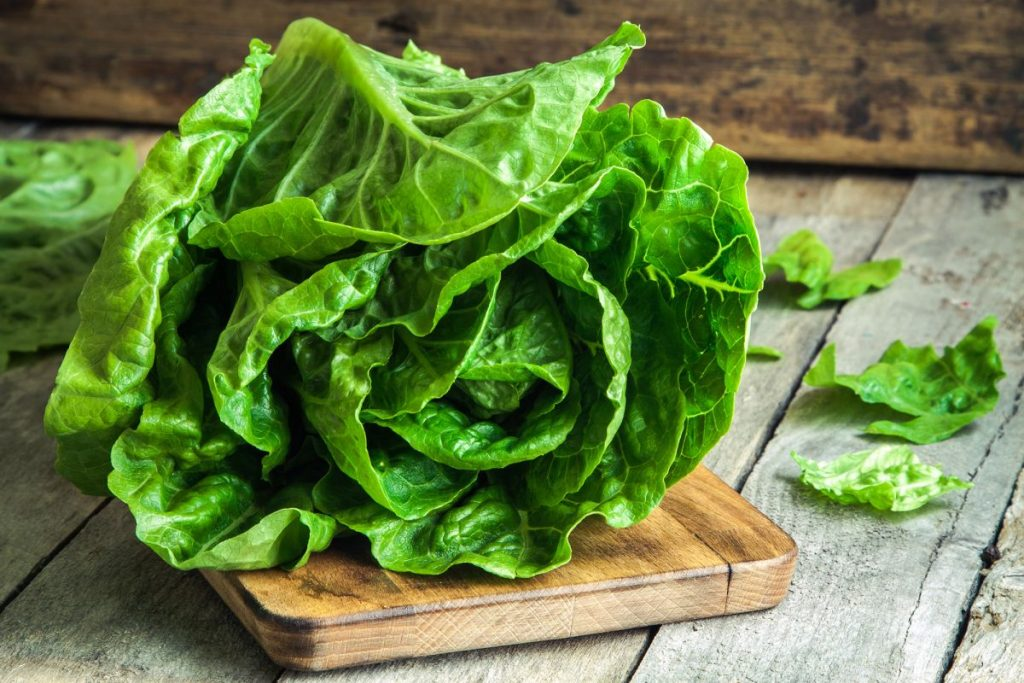 lettuce nutrition facts and calorie