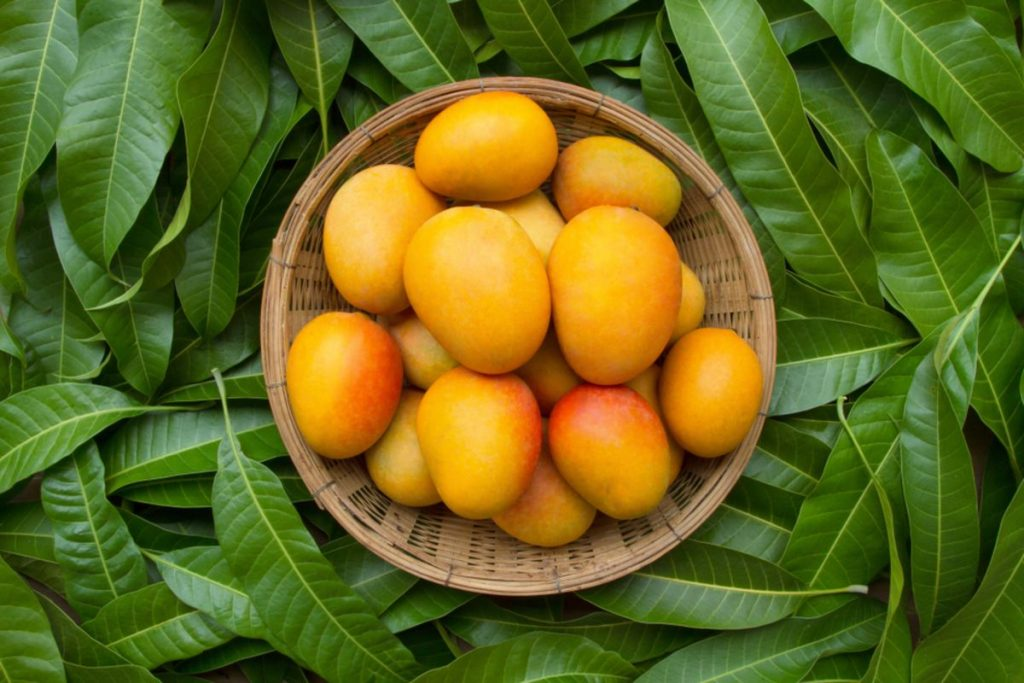 Mango nutrition facts and calorie