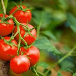 Tomato Nutrition Facts & Calories Information
