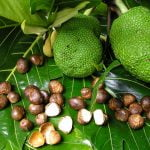 Breadfruit Seeds Nutrition Facts and Calorie Information