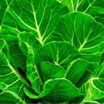 Collard Greens Nutrition Facts and Calorie Information