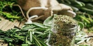 Dried Rosemary Nutrition Facts