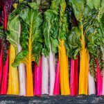 Swiss Chard Nutrition Facts and Calorie Information