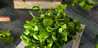 Watercress nutrition facts and calorie