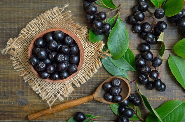 Aronia Berries Health Benefits