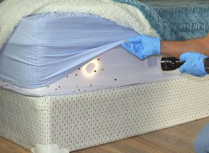 bed bug pictures - Mattress