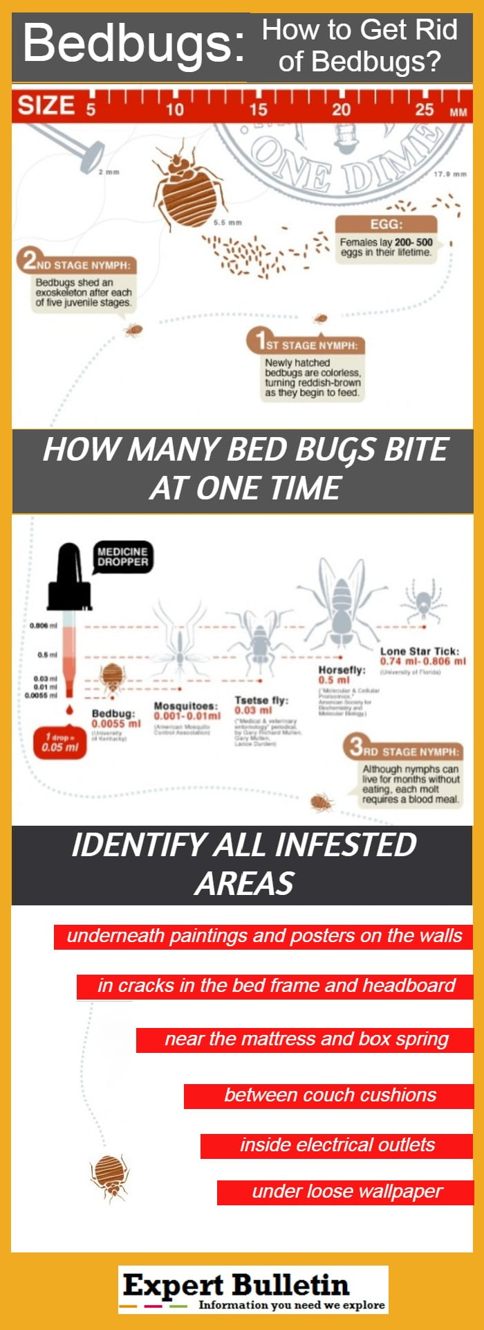 Bedbugs Infographic