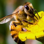 6 Home Remedies for Bee Stings